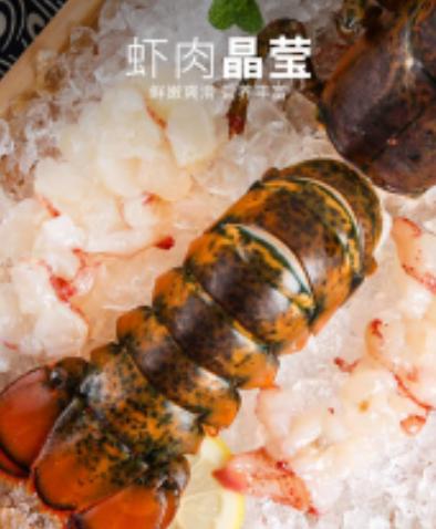 活冻波士顿龙虾